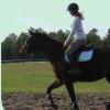 Profil de horseloustic