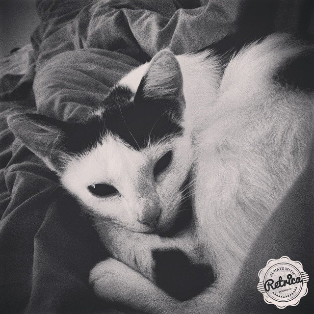 #cat #instachat #auchaud #pretty #enjoy #princesse #beautiful #love #Perfect #insta #instagood #inst