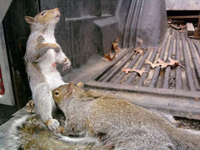 Not enough nuts lool