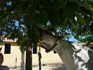 Jédï qui mange les arbres ! Normal...!