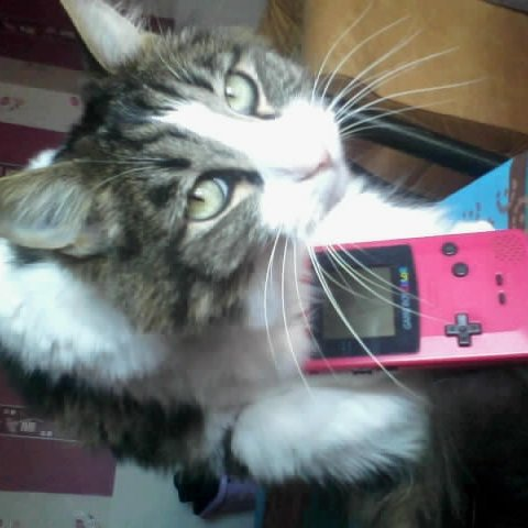 Le meilleur des chats :p le chat geek :D
