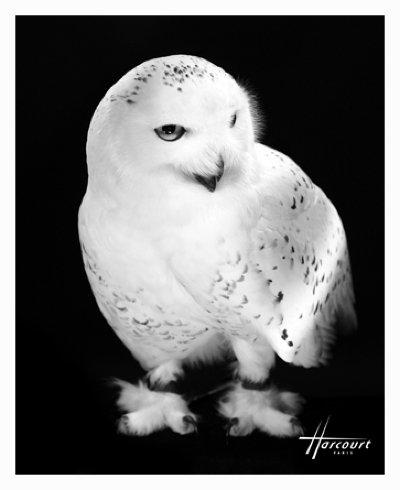 Hedwige, photographiée par le studio Harcourt