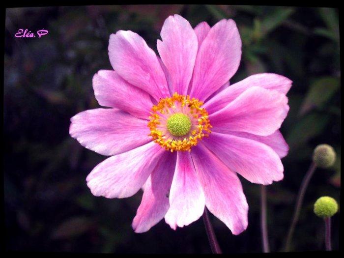 Fleur ♥