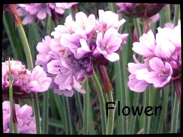Flower ♥
