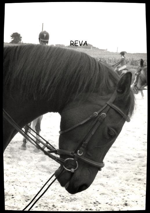 Reva ♥