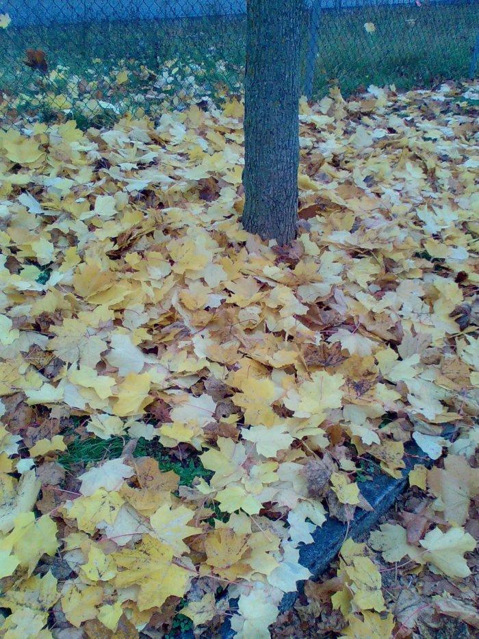 Tapis de feuilles..