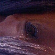 oeil de méfisto