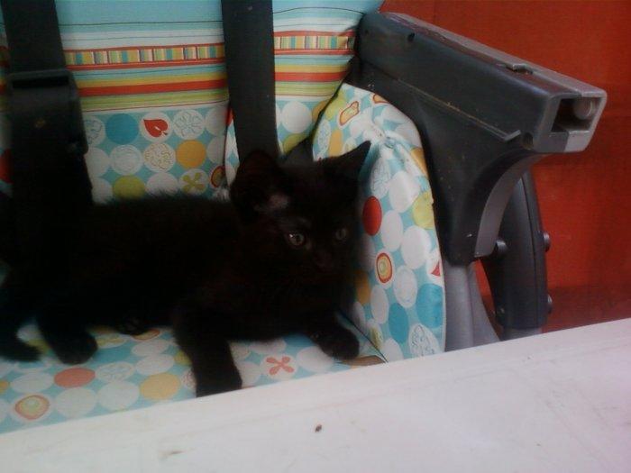 Mon petit Zorro est tout noir, alors 'c'est pas simple de l