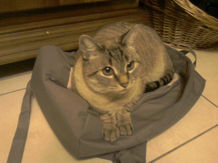 Mozart sur un sac.