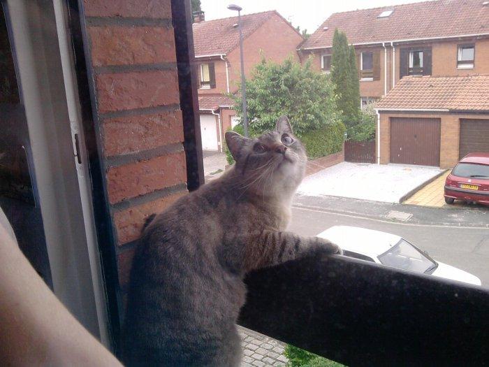 Mozart à la fenêtre.