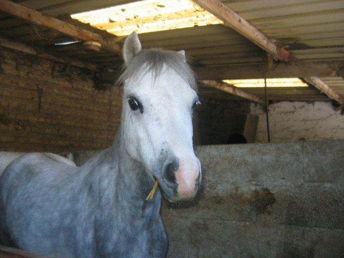 Gribouille je t'adore.tues vraiment mon poney préféré