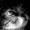 blog-animaux-17