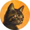 Profil de Griffederonce21