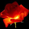 Profil de larosedessables62