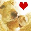 Profil de Dogs-and-Love