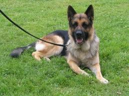 Mon chien Midor
