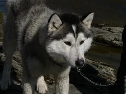 Ma chienne Zouza