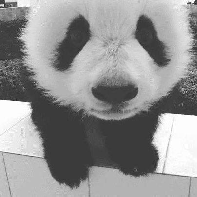 Ahhh les pandas, on n'y touche pas ! ♥