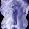 Really-Love-Horses