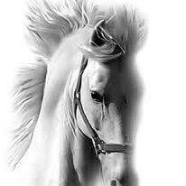 Les chevaux: Trop beau♥