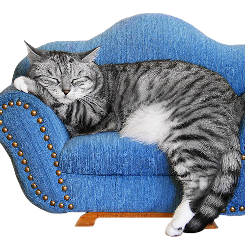 Les chats: j'ad'♥re