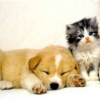 Profil de Lisa-Love-animals