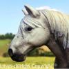 loves-chleichs