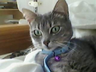 Mon petit chat, Choupette