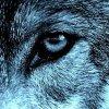 Profil de Louve-Bleue13