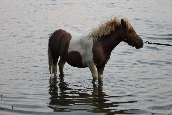Le poney qui veux pas avanceer x)