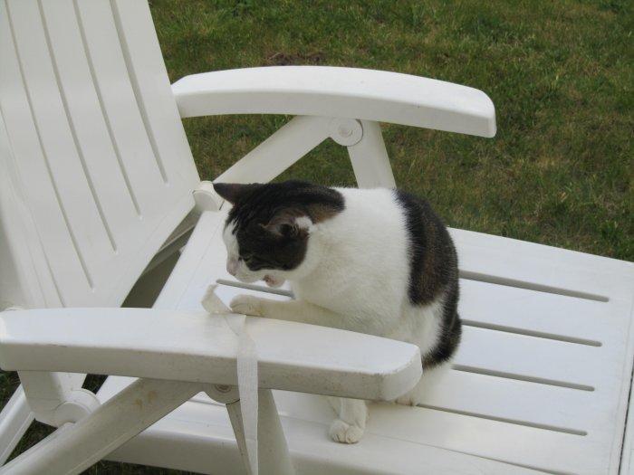 Grrrr, cat's attack