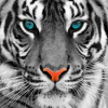 Profil de alfdu54