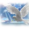 Profil de colombe247