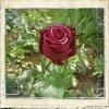 Profil de Mel-rose-noire