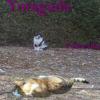 Yotagada