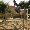 x3horses-dream