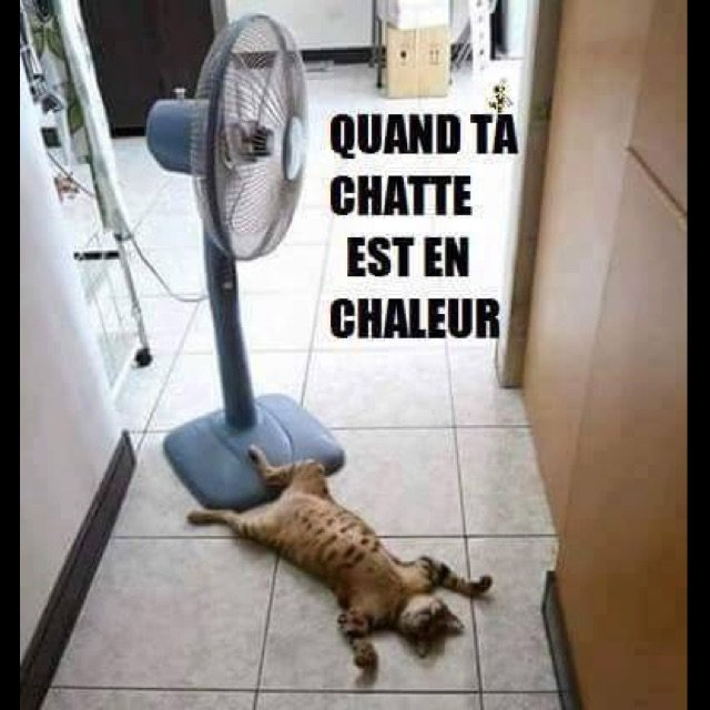Tranquille ainsi lol