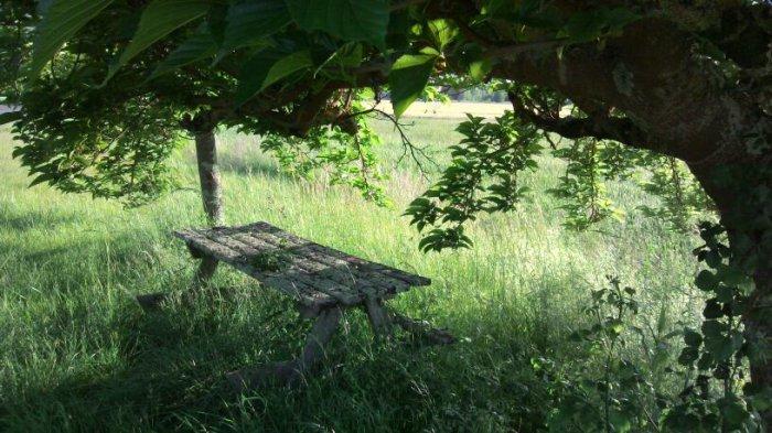 Table au bois dormant