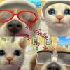 Profil de Nintendogs-Nouka