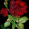 rosemariecirineu's Profile