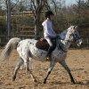 centre-equestre-jablines