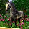 Profil de Beauty-Photographie-Sims