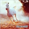 Profil de Cheval16