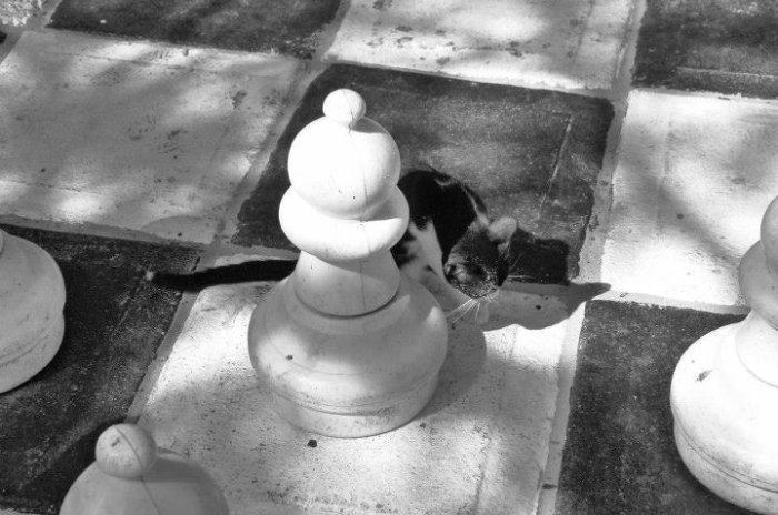 El gato negro de la Habana...  ;)