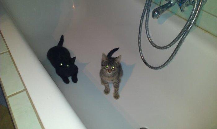 Chats + baignoire