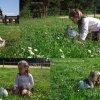 les-lapins-d-Or