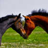 Profil de cheval70700