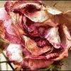 Profil de OrchidA-26