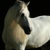 Profil de clairissedu33