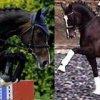 sporthorses-online